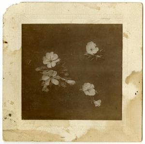 Primary view of object titled '[Photograph of Flowers]'.