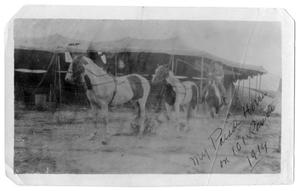 Primary view of object titled 'My parade horses on 101 Ranch, 1914'.
