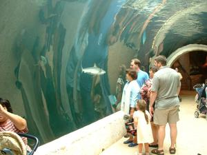 Primary view of object titled '[Visitors in a glass tunnel look at sharks swimming past]'.
