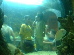 Primary view of object titled '[Two small boys look at the aquarium]'.