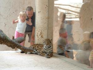 Primary view of object titled '[Jaguar looks at the photographer while tourists look on]'.