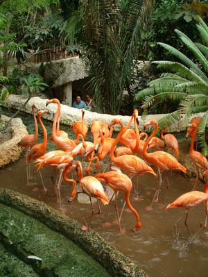 [Flock of flamingos in their pond, with visitors looking on]