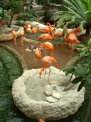 Primary view of object titled '[Flock of flamingos with large round cement birdbath]'.