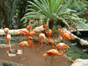 Primary view of object titled '[Flock of flamingos with palm plant]'.