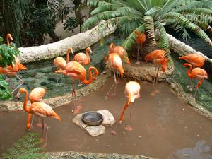 [Flamingos in a pond]