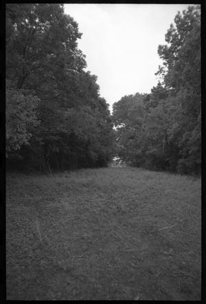 Primary view of object titled '[Forest clearing at Orcoquisac site]'.