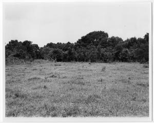 Primary view of object titled '[Site of 1766 Orcoquisac presidio compound]'.