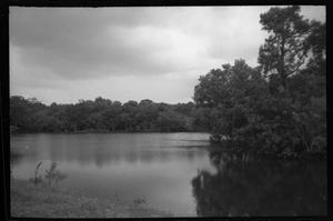 Primary view of object titled '[Trees around Miller's Lake]'.