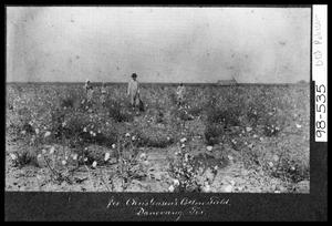 Primary view of object titled 'Christensen's Cotton Field'.