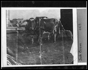 Primary view of object titled 'Oxen Used in Farming'.