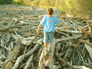 [Boy walking on a log in a pile of brush]