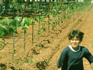 Primary view of object titled '[Boy runs down a row of cultivated grapevines]'.