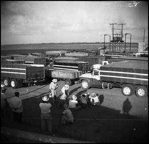 Primary view of object titled '[Group of People Next to a Cluster of Dump Trucks]'.