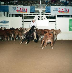 A man in a white shirt and white cowboy hat rides a black horse, which is charging towards one of several cattle in the pen. On the white stands behind all of this, there are two signs for NCHA.