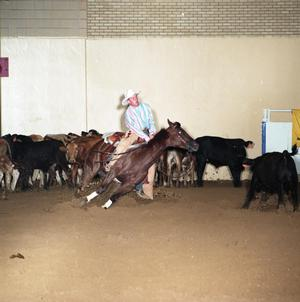 Primary view of object titled 'Cutting Horse Competition: Image 1991_D-15_10'.