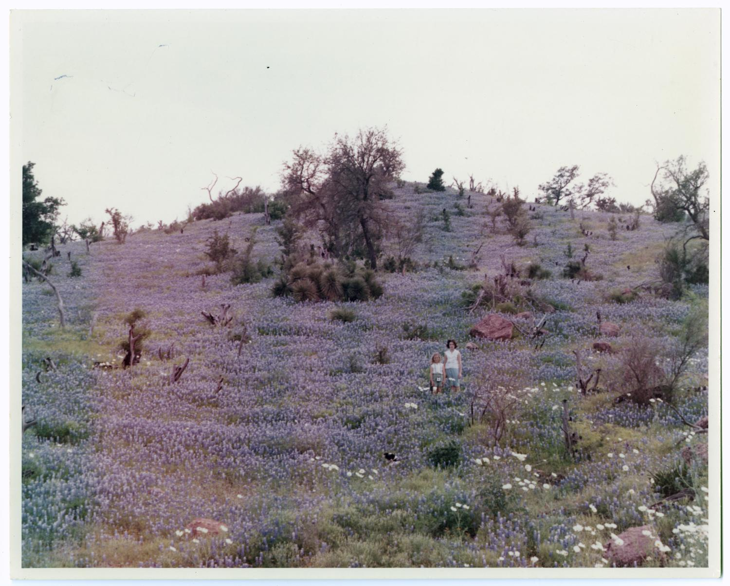 [Photograph of a Woman and Girl in Field of Bluebonnets]                                                                                                      [Sequence #]: 1 of 2