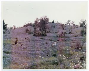 Primary view of object titled '[Photograph of a Woman and Girl in Field of Bluebonnets]'.