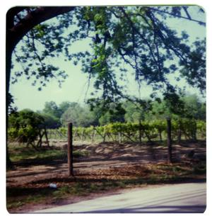 Primary view of object titled '[Qualia Winery - a - Hudson Drive]'.
