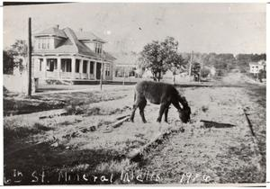 Primary view of object titled '[A Donkey on 6th Street Mineral Wells, 1916]'.