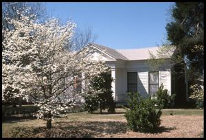 Primary view of object titled '[Dogwood Trees in front of the Howard House]'.