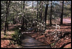 Primary view of object titled '[Photograph of a Small Creek in Davey Dogwood Park during the Spring]'.