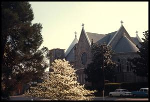 Primary view of object titled '[Dogwoods around the Sacred Heart Catholic Church]'.