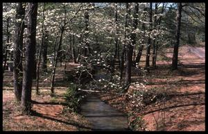Primary view of object titled '[Photograph of Small Creek in Davey Dogwood Park during the Spring]'.