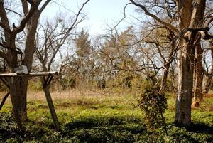[Photograph of Hendrix Cemetery]