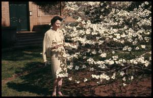 Primary view of object titled '[Betty Flanagan and the Dogwoods at the Carnegie Building]'.