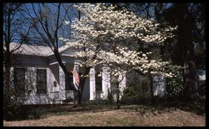 [Dogwood Tree in front of the Howard House - 1011 N. Perry]