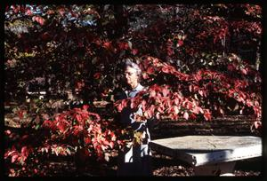 Primary view of object titled '[Photograph of Woman and Dogwood Tree]'.