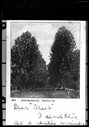 Primary view of object titled '[Sycamore Trees on S. Sycamore Street]'.