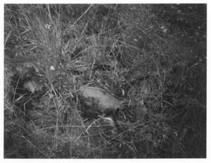 Primary view of object titled 'Unmarked Grave at Riley Cemetery'.
