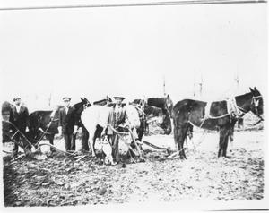 Primary view of object titled 'Three Plowmen Standing beside Their Team on Frank Brawley Farm'.