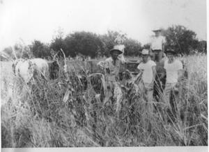 Primary view of object titled 'Harvesting Corn on L.G. Palmer Farm'.