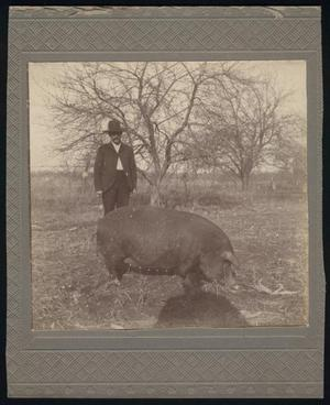 Primary view of object titled '[Cage McNatt with Pig]'.