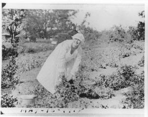 Primary view of object titled 'Henrietta Bideault Picking Cotton'.