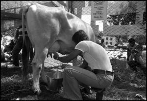 Primary view of object titled '[Milking Contest]'.
