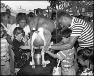 Primary view of object titled '[Milking Demonstration]'.