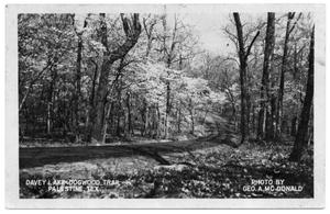 Primary view of object titled '[Davey Lake Dogwood Trail]'.