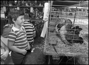 Primary view of object titled '[Boy Looking at Two Chickens]'.