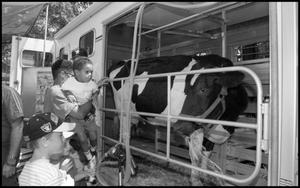 Primary view of object titled '[Agrifood Masters-Classroom Cow]'.