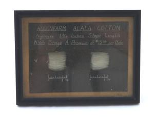 Primary view of object titled 'Cotton display'.