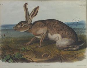 "Primary view of object titled '""Texian Hare""'."