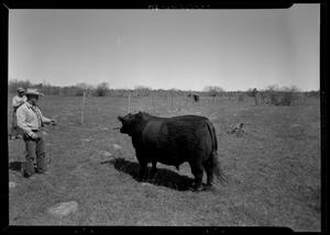 Primary view of object titled '[Man Leading Bull]'.