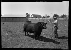 Primary view of object titled '[Bull and Ranch Hand]'.