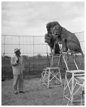 Primary view of object titled '[Joe Louis with Circus Lions]'.