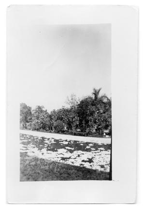 Primary view of object titled 'Pool of Gardenias'.