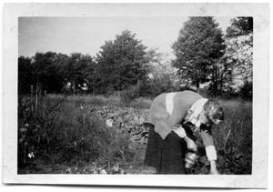 Primary view of object titled 'Woman bending over a line of bushes'.