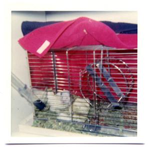 Primary view of object titled 'A hamster sitting in its cage'.
